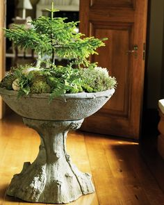 From Martha's Home to Yours: Moss Gardens - Martha Stewart Decorating with Nature