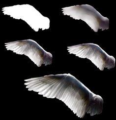 Wings  tutorial:] by andrework.deviantart.com on @deviantART