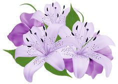 Purple Exotic Flowers PNG Clipart Image