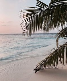 Image uploaded by Find images and videos about beach and ocean love sea on We Heart It - the app to get lost in what you love. Beach Aesthetic, Summer Aesthetic, Travel Aesthetic, Japanese Aesthetic, Pink Aesthetic, The Beach, White Sand Beach, Summer Beach, Beach Grass