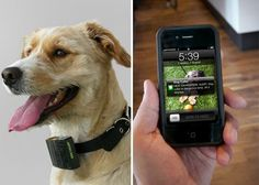 Texting Dog Collars and Other Smart Tech for Pets