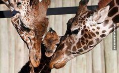 3227 Csodálatos állatos képek
