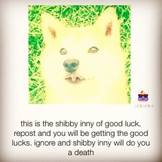 I need all of the luck I can get. LAT WEEK OF SCHOOL. Also the doggie has a funny tongue