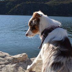 Another picture from Apache LakeI love our Arizona adventures  #miniaussie  #dogsofinstagram #petstagram  #australianshepherd  #dogoftheday #doglover #dog_features #aplacetolovedogs  #sendadogphoto #lacyandpaws  #dogsofinstaworld #petsofinstaworld #bestwoof  #animaladdicts #excellent_dogs #dogsandpals #animalsco  #dogsofficialdog #topdogphoto #dogscorner #az365 #hikeaz #arizona #arizonaliving #adventuredog #dogsonadventures #abc15 #dogphotography #azdogs by arya_the_aussie