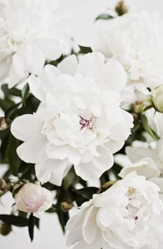 Pretty peonies in white .