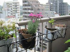 Hanging balcony planter using pots Balcony Planters, Hanging Planters, Porch, Plants, Life, Balcony, Garden Box Raised, Balcony Railing Planters, Planters