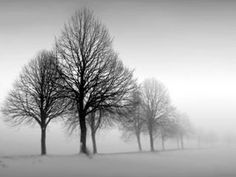 Liberty Hyde Bailey Blog: How the Trees Look in Winter