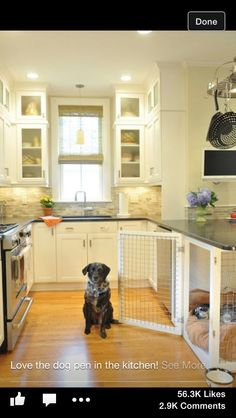 Dog pen in the kitchen; built-in counter top!