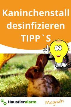 erfahre worauf du beim Kaninchenstall desinfizieren achten musst... Rabbit, Animals, Animales, Bunny, Rabbits, Animaux, Bunnies, Animal, Animais