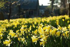 prettylittleflower:    Spring has sprung (by silentandy)