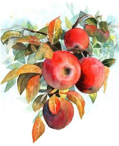 Apples by CyjanekPotasu on deviantART:
