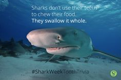 Sharks swallow their food whole!  Canyon Ridge Pediatric Dentistry, Parker & Castle Rock, CO.  www.canyonridgepediatricdentistry.com