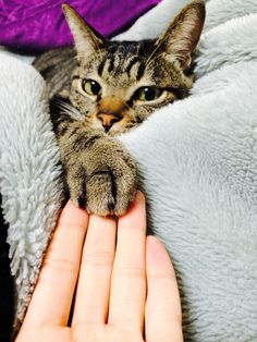 the touch of love, loyalty & companionship. I always hold my cats' paws.