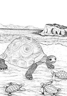 Kleurplaten Voor Volwassenen Schildpad.34 Beste Afbeeldingen Van Kleuren Drawings Colouring Pencils En