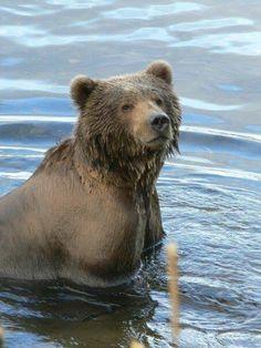 Kodiak bear!