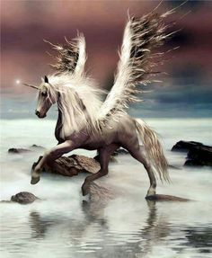 2017/01/15 Pegasus