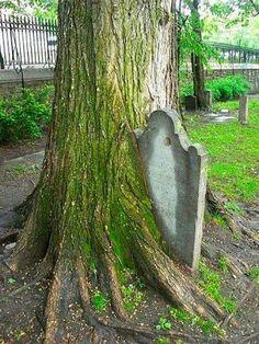 árvore desenvolvida sobre a lápide (vida brotando da morte)