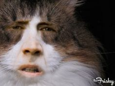 Nicholas Cage Cat! I don't know why this is so funny...