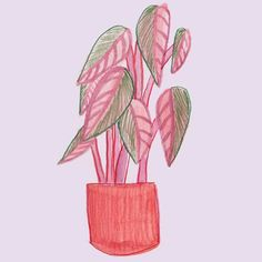 I am obsessed with indoor plants. I love the way they bring life to a space and I enjoy my couple of hours gardening a week - watering taking cuttings planting etc. This little hobby gives me brain space and down time I desperately need. So I decided to paint a bunch of them and turn them into a brand new project (coming soon!)  #plantsofmelbourne #cactus #succulent #plantstagram #purple #tricolour #melbourneartists #melbourneplantclub #indoorplants Planting, Gardening, Plant Cuttings, Cactus Flower, Indoor Plants, Brain, Succulents, Give It To Me, Couple