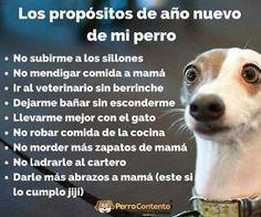 Los Propositos De Año Nuevo De Mi Perro