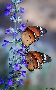 BUTTERFLIES:  reminding us of a Divine creator.