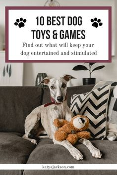 Best Interactive dog toys and games, best dog toys, stimulating dog games, toys to keep dog busy while at work Smart Dog Toys, Best Dog Toys, Best Dogs, Online Pet Supplies, Dog Supplies, Outdoor Dog Toys, Kong Dog Toys, Whippet Puppies, Interactive Dog Toys