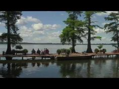 51 Best Reelfoot Lake images in 2019   Tennessee, Crappie Fishing