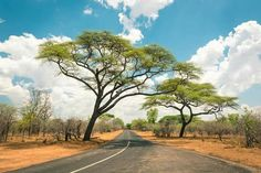 African landscape with empty road and trees in Zimbabwe royalty free stock images Kruger National Park, National Parks, Empty Road, Park Landscape, Victoria Falls, Zimbabwe, Day Trips, Things To Do, Scenery