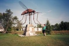 Clute Mesquito--CLUTE, my hometown and home. F the Great Texas Mosquito Festival!
