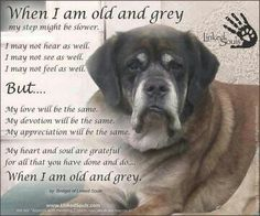 Why humans so interested about the young little dogs & cats when there's others older who need a home just as much as the young ones! Plz. consider adopting an older pet they need you just as much as you to them, & they'll luv you just as much as a puppy or kitten!