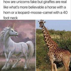 Crazy Funny Memes, Really Funny Memes, Funny Animal Memes, Cute Funny Animals, Stupid Memes, Funny Relatable Memes, Haha Funny, Funny Cute, Funny Jokes