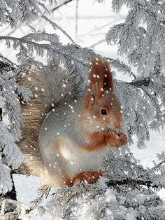 3303834_animaciyanatelefonzima_24 (240x320, 1310Kb) I Love Winter, Winter Time, Snow Scenes, Winter Scenes, Winter Pictures, Christmas Pictures, Christmas Scenes, Christmas Art, Animals Beautiful