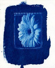 Cyanotype Gerbera - Favini 340gsm Water Colour Paper