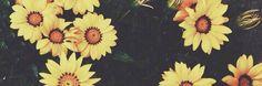 flower twitter header.