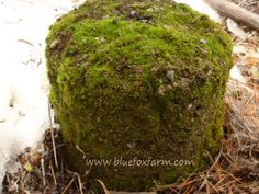 Ready to get aged and weathered, and grow lots of moss?  Here are some ways to speed the process up; www.bluefoxfarm.com/how-to-make-hypertufa-look-old.html