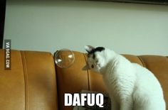 DAFUQ - LOLcats is the best place to find and submit funny cat memes and other silly cat materials to share with the world. We find the funny cats that make you LOL so that you don't have to. I Love Cats, Crazy Cats, Cute Cats, Cat Fun, Funny Animal Pictures, Funny Animals, Cute Animals, Funniest Animals, Random Pictures