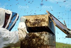 Working on . with opening their Royalty-Free Stockphoto. Images of & available for all your & Needs. More Images available in my Portfolio. See Link in Bio 🐝 My Portfolio, Bee Keeping, Commercial, Advertising, Wellness, Stock Photos, Marketing, Royalty, Photography