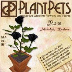 PlantPet Seed [Rose *Midnight Desires*] RARE ELITE!!!