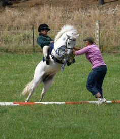 1000+ images about Show jumping on Pinterest | Show ...