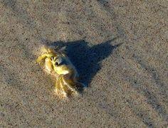 crab batman - Google Search