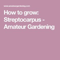 How to grow: Streptocarpus - Amateur Gardening