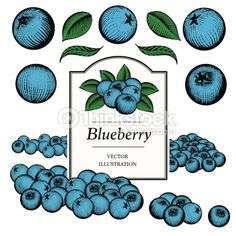 Vector Art : Blueberry