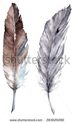 feather, watercolor, vector, brown, bird, abstract, drop, isolated, decoration, two, natural, 2, tribal, pair, indigo, botanical, symbol, aquarelle, graphic, element, drawing, paint, ethnic, gray, grey, creative, illustration, object, artwork, collection, design, color, colorful, clip, blue, isolate, sketch, composition, beauty, set, fauna, art, artistic, beautiful, drawn, wild, nature, environment, animal, wildlife