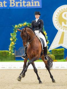 Huge reach from this stunning dressage horse! Talk about impulsion!
