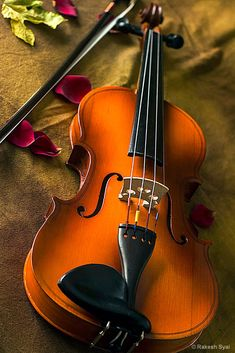 I Will Start Writing Printing Education Pictures Sound Of Music, Music Love, Music Is Life, Oil Painting Pictures, Pictures To Paint, Cellos, Violin Photography, Cool Pictures For Wallpaper, Bamboo Background