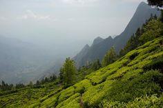 Worlds highest tea plantation in Munnar in Kerala. WOW. #travel #wanderlust #kerala #india