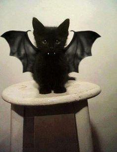 con disfraz de murciélago
