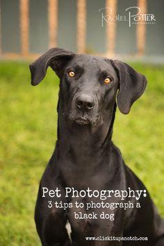 Pet Photography: Q & A | How to Photograph a Black Dog via www.clickitupanotch.com