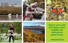 LAUNCHING TODAY! Our new #MyWildLife campaign - please explore and share!  We think all our lives are better when they're a bit wild. Our new campaign celebrates this and shows just how much nature matters to all our lives.  What's does your wild place mean to you? Join hundreds of others and share your wild life with us at http://www.mywildlife.org.uk/  #TheWildLifeTrusts #MyWildlife, #wildlife #wild #nature