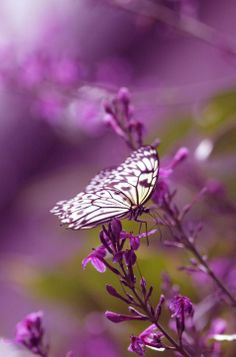 Butterfly landind on Orchid - Radiant Orchid color flowers Papillon Violet, Papillon Butterfly, Purple Butterfly, Butterfly Flowers, Beautiful Butterflies, Purple Flowers, Beautiful Flowers, Flowers Garden, Flower Bokeh
